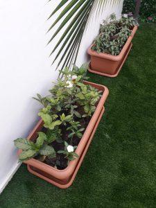احواض زرع