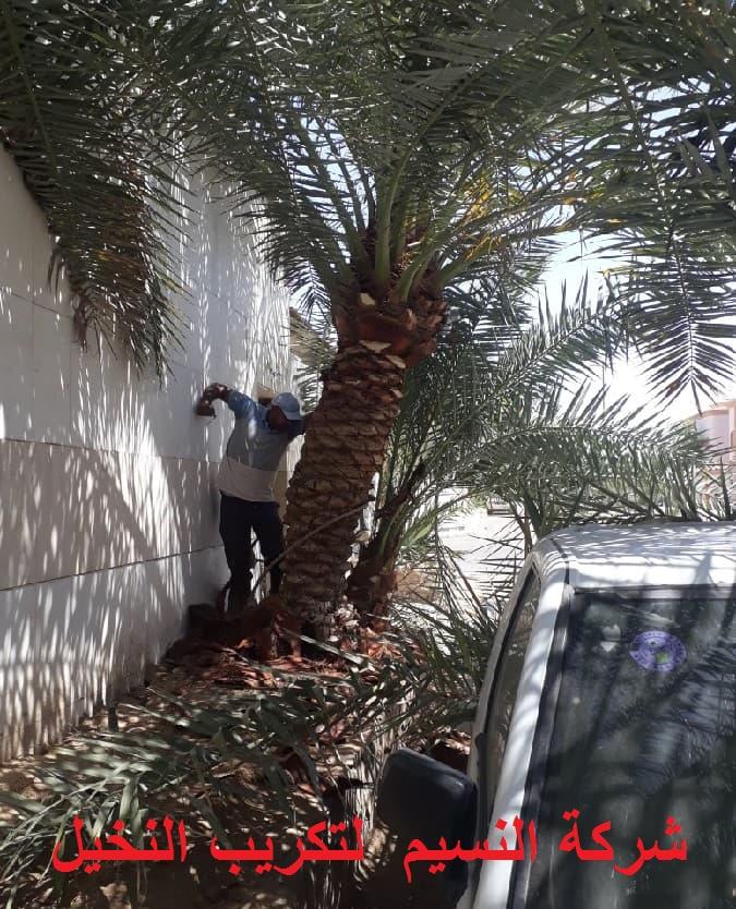 Photo of شركة تكريب النخيل بجدة 0538263919 تلقيح وتنظيف النخيل