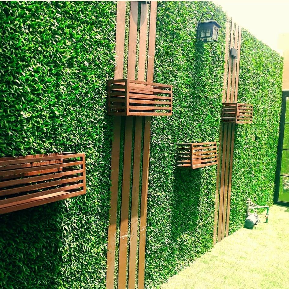 عشب جدارى
