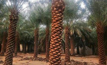 Photo of شركة تكريب النخيل بالخبر 0507683590