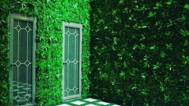 Photo of عشب جداري جدة 0541592141 زرع جدارى