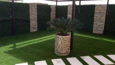 Photo of عشب جدارى بمكة 0538263919