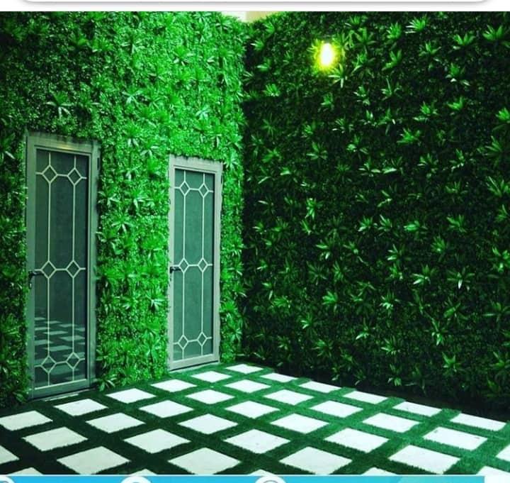 عشب جدارى بالقصيم