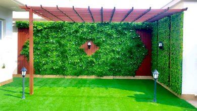 Photo of عشب جدارى بالطائف 0538263919