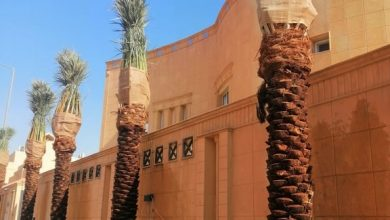 Photo of شركة تكريب النخيل بالرياض 0541744664