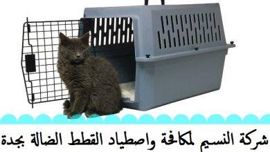 Photo of شركة مكافحة القطط بجدة