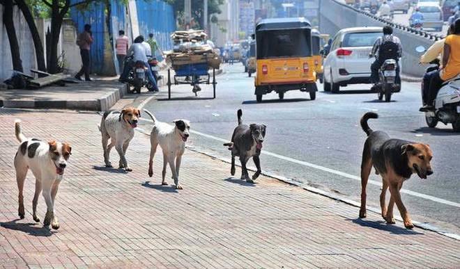 شركة مكافحة الكلاب الضالة بجدة