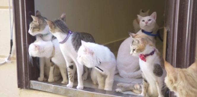 شركة مكافحة القطط بجدة