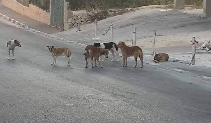 شركات مكافحة الكلاب الضالة