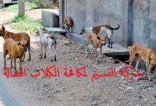 Photo of شركة مكافحة الكلاب الضالة بجدة