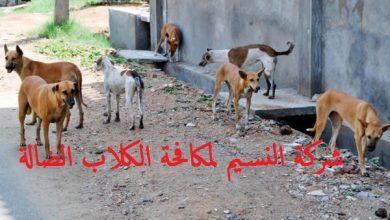 Photo of شركة مكافحة الكلاب الضالة بجدة 0500855537