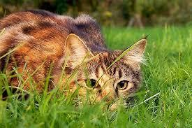 مكافحة القطط الضالة بجدة