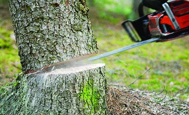 شركة قص الاشجار بالرياض