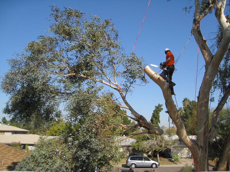 شركة النسي لقص الاشجار